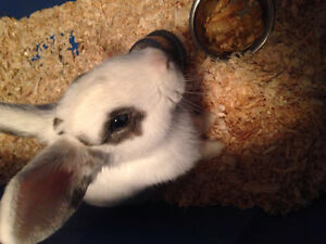 Cute bunny needs a loving home