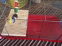 Hamster / gerbil / Guinea pig cage