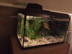 10 gallon fish aquarium London Ontario image 3