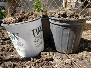 Clay soil for free