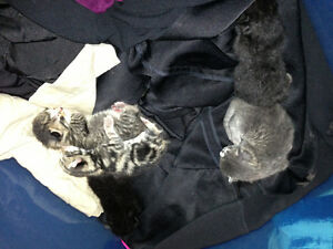 new born kittens