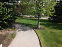 Affordable and professional landscaping services.