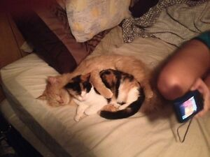 Calico female needs a new home.