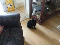 2 amazing cats for rehome