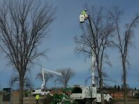Tree Removal - Tree Trimming - Stump Removal