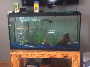 80 gallon tank and red ear slider turtle