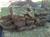 FREE: Fresh Batch! Grass for Landscaping, patching, you name it