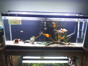 55G, and 30G  fish tanks plus stand