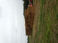 50 Large squares of straw for sale