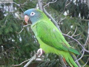 ISO A CONURE