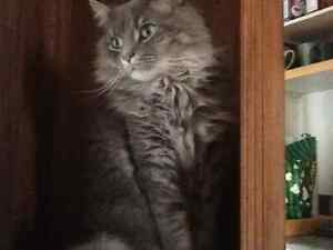 Paka has been missing from Welland since Sept 10, 2016