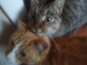 Cats found