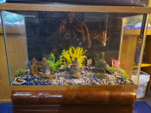 35 gallon tank with everything you need