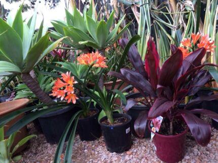 Plant Sale O'Halloran Hill Marion Area Preview