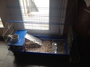 Bunny with cage etc for sale