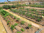 How to plan a drip irrigation system ebay - How To Plan A Drip Irrigation System Ebay