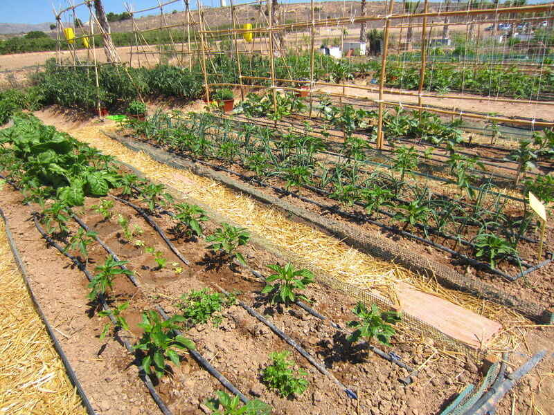 How to plan a drip irrigation system ebay for Home garden drip irrigation design