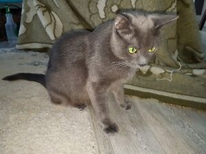 Lovely Grey Lady Spayed and Ready to Enjoy a Forever Home