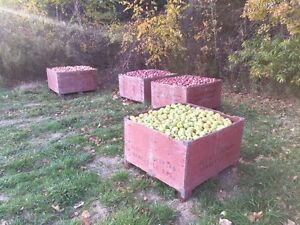 Ground Apples for sale! $80 a bin! Kawartha Lakes Peterborough Area image 2