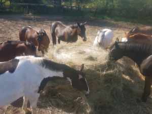 Position available on horse farm in campbellville