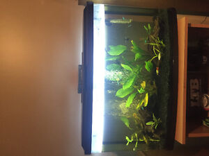 1 month old 23 gallon tank brand new