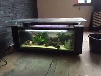 Coffee table aquarium fish tank for tropical or marine fish 220-240 liters