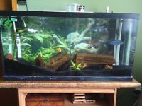 Fish tank, stand and sump pump filter