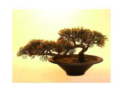 """EUROPALMS Bonsai-Zeder 160 Spitzen 40cm, """"Cedar"""", Kunstpflanze"""