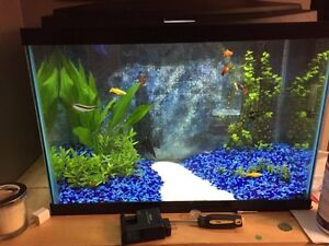 20 gallon fish tank with led light, heater and filter