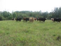 RANCH W/ HOME, SHOP, CORRALS AND OIL SURFACE REVENUE