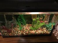 10 gallon tank with fish and accessories
