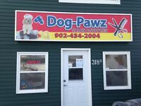 Experienced dog groomer