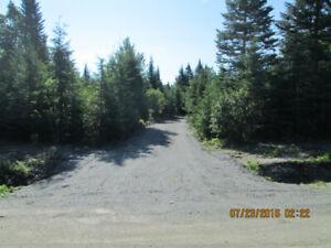 terrain boisé