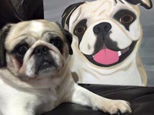 Pet Portraits on Canvas