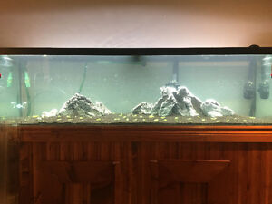 Aquarium 125 gallon plus lights