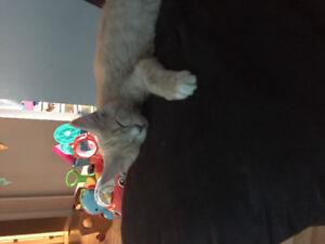 Wonderful cat needs home