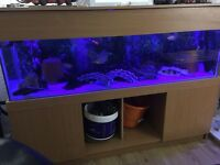 5ft fish tank with unit and lid