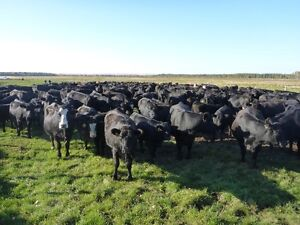 UNRESERVED PUBLIC LIVESTOCK AUCTION - SPRUCE GROVE, AB