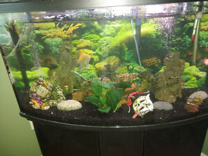 45 gallon established fish tank for sale