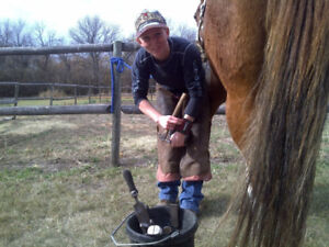 Professional Farriers Needed