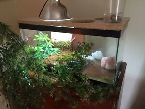 Looking for reptiles, accessories, and fish!