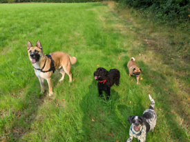 Dog walking and drop in service