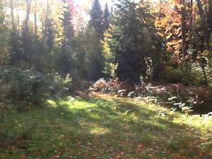 Country home in Irondale for private sale Kawartha Lakes Peterborough Area image 5