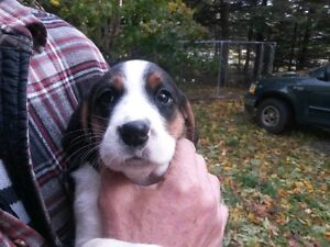 Puppy looking for a good home