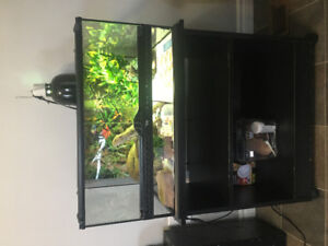 Bearded Dragon with set up for sale