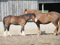 2 Great Horses Looking for a Loving Home