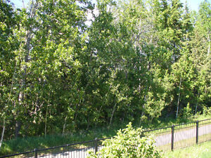 UNBEATABLE RAVINE LOCATION!  CUSTOM 4 BED BUNGALOW IN DEVON Edmonton Edmonton Area image 4