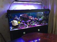 Marine reef DSunY LED light ( fish, corals,a aquarium)