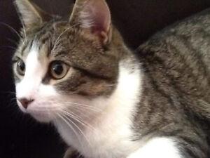 Chat perdu à Châteauguay