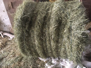 Hay square and round horse quality 2018